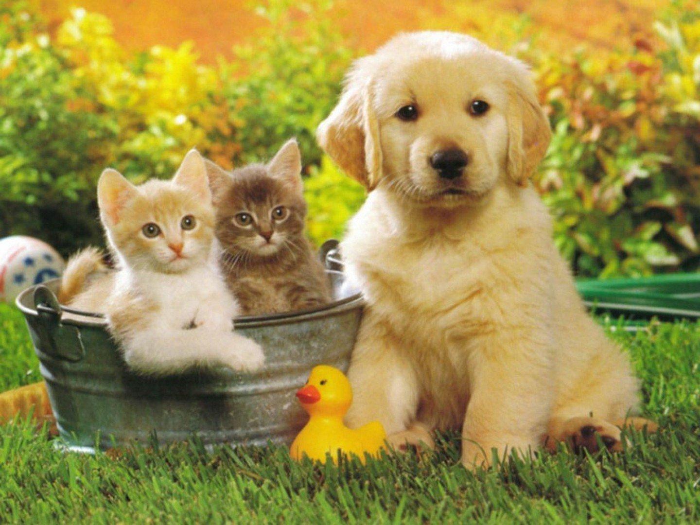 Животные картинки для детей фото